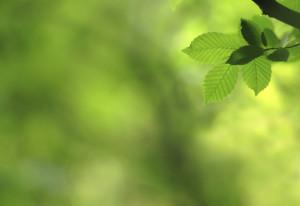 iStock_000006841970_Large Leaf